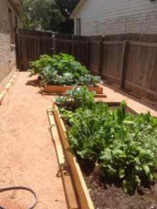 garden-grow-2